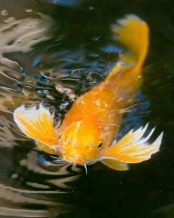 1. Mimpi Ikan Berenang