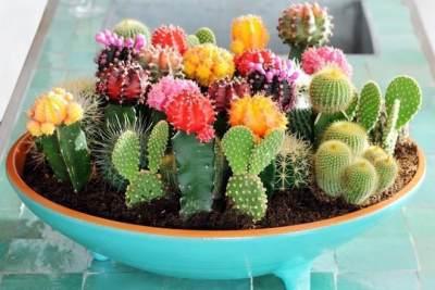 6 Manfaat Kaktus Untuk Kesehatan dan Kecantikan, Bikin Awet Muda Lho!
