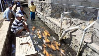 Inspiratif! Saluran Irigasi Penuh Sampah Disulap Jadi Kolam Ikan ala Jepang di Banyuwangi
