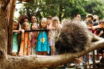 Cara Mudah Mengenalkan Binatang Pada Anak, Coba 5 Tips Ini