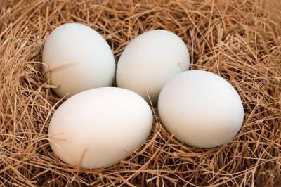 Kandungan gizi telur bebek
