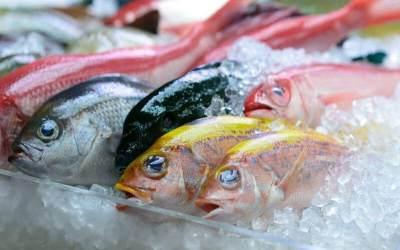 Tips Praktis Menyimpan dan Membekukan Ikan Agar Tetap Segar di Kulkas