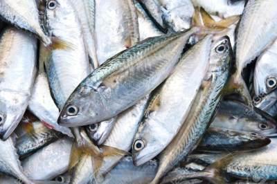 8 Kandungan Penting Dalam Ikan, Apa Saja Manfaat Mengonsumsinya?