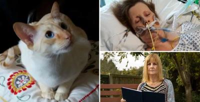 Dicakar Kucing, Nenek Ini Koma dan Jalani 8 Kali Operasi