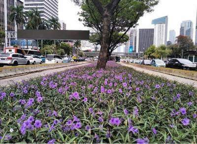 Percantik Jalanan Jakarta, Si Bunga Ungu Ini Juga Punya Manfaat Kesehatan Lho!