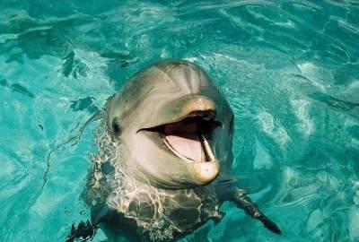 Beruntung, Anak 10 Tahun Ini Selamat Setelah Digigit dan Diseret Lumba-lumba