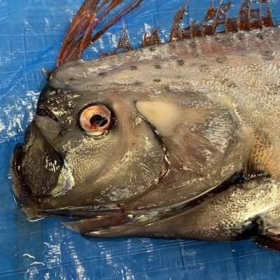 5 Fakta Tentang Ikan Oarfish