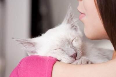 Penyebab, Gejala, dan Cara Mengatasi Toksoplasma