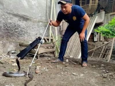 Teror Kobra! Ini Moms Tips Agar Ular Tak Masuk ke Dalam Rumah