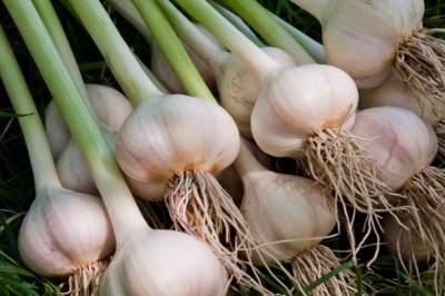 4. Bawang putih