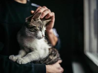 Aksi Heroik Jefri Nichol Selamatkan Kucing yang Terjebak, Sempat Ketakutan!