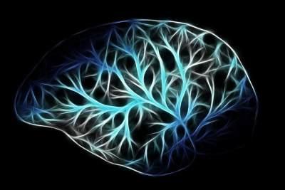 Fungsi Eksekutif Otak yang Lebih Baik