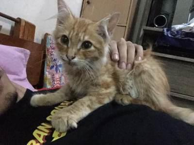 Kisah Kucing yang Mendadak Sembuh dari Sakit Setelah Mengunjungi Makam Majikannya