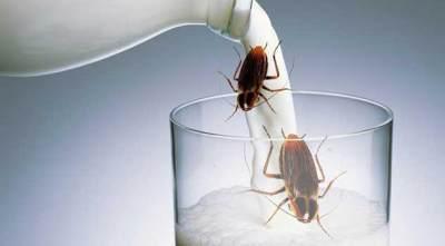 Susu Kecoa Bakal Jadi Tren Minuman Kesehatan di 2020, Berani Coba?