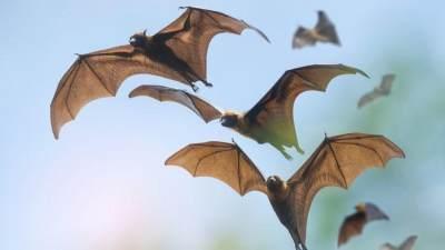 Berhenti Makan Hewan Liar, Kelelawar dan Ular Diduga Penyebab Virus Corona