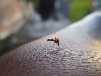 Aman untuk Bayi, Ini 6 Cara Mudah dan Alami Mengusir Nyamuk