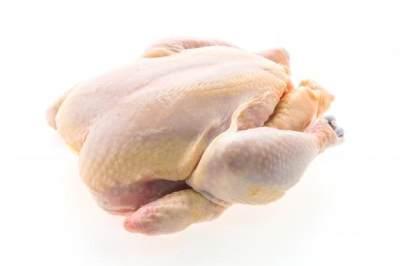 Mitos Seputar Brutu Ayam