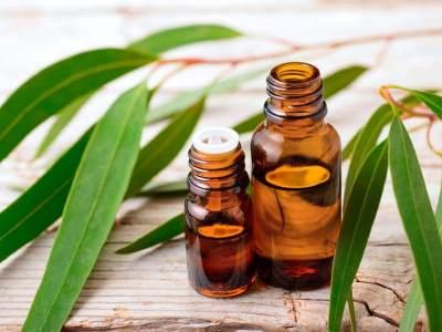 Jadi Obat Batuk Alami, Ini 6 Manfaat Minyak Kayu Putih